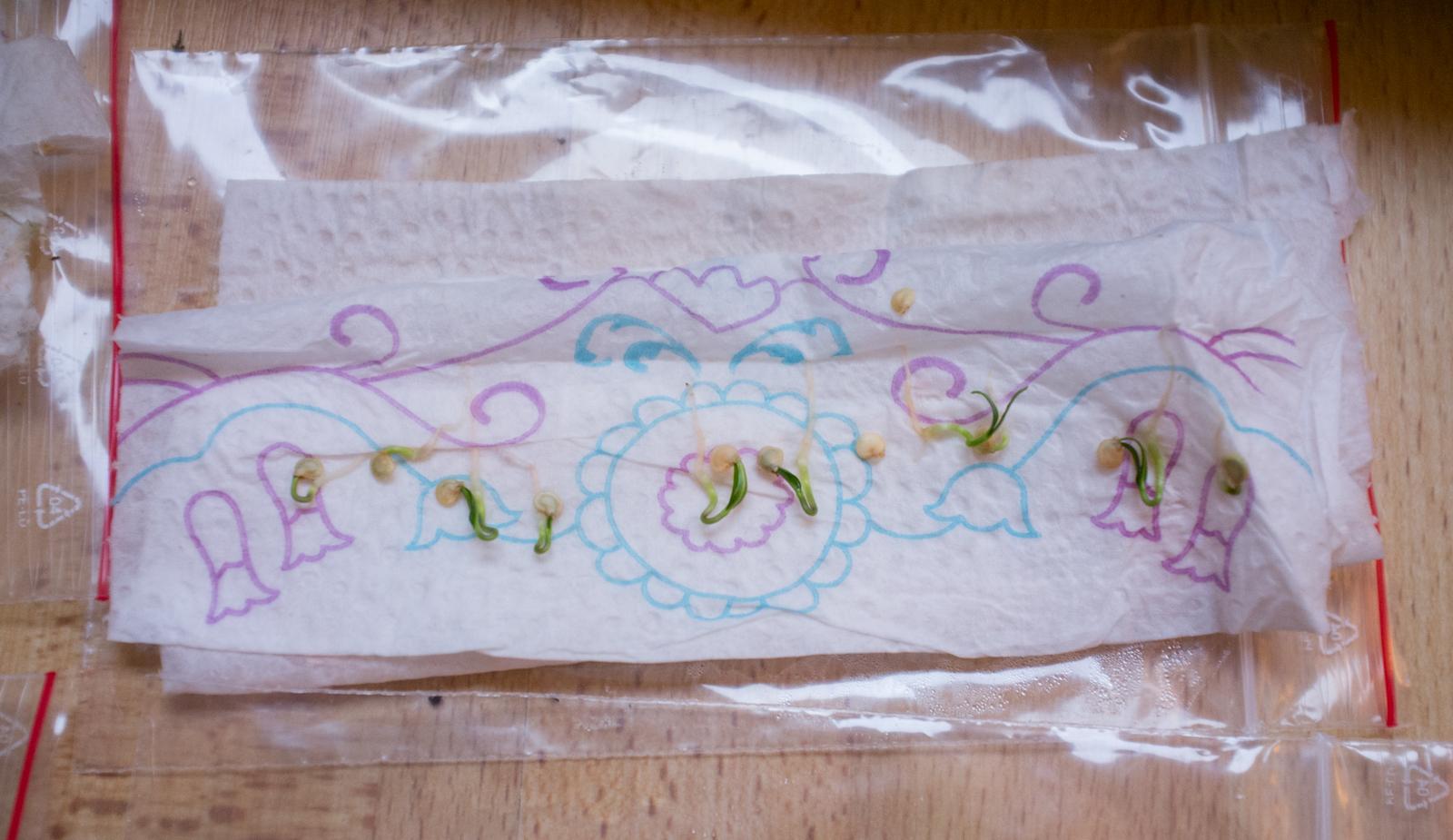 Seedlings in paper